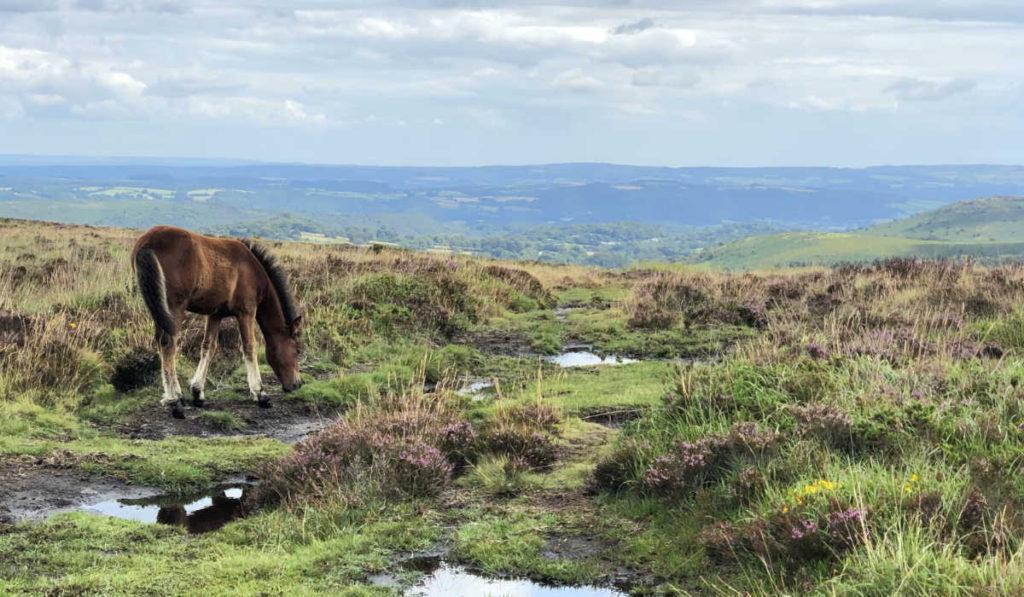 Visionssuche 2020 Dartmoor England